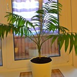 Как пересаживать комнатные растения правильно – правила и инструкция пересадки домашних растений своими руками