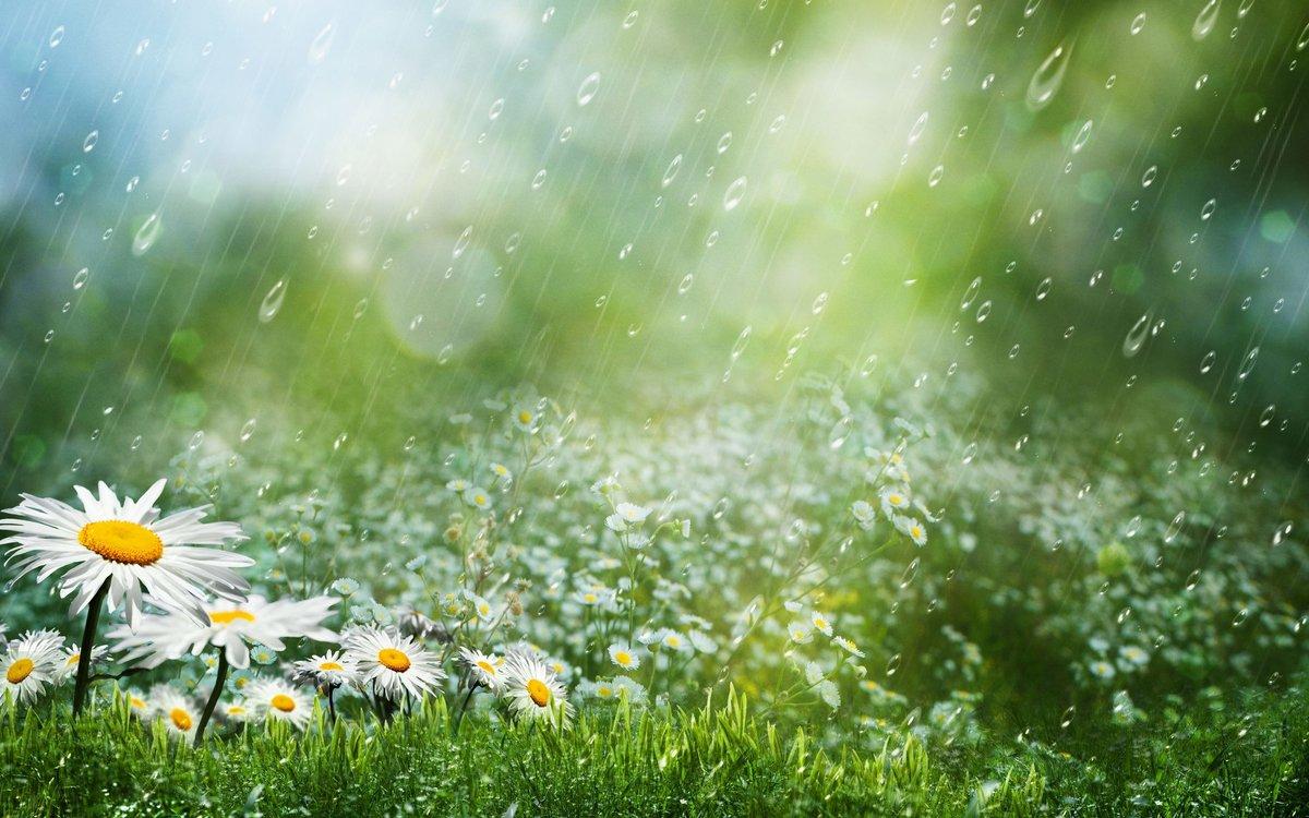 Летний дождь с солнцем