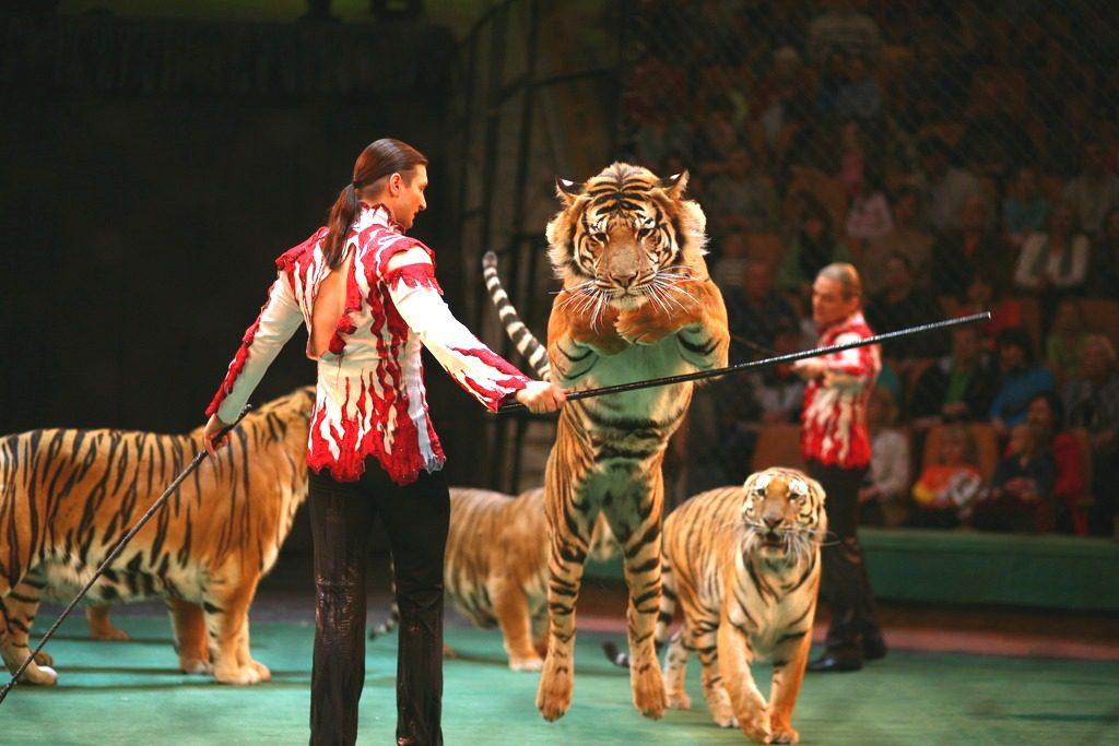 Дрессировщик с тиграми