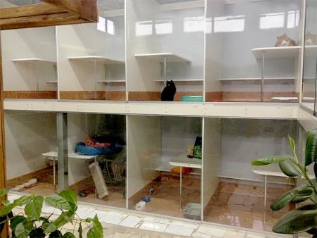 Гостиничный номер для кошки