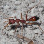 муравьи в квартире