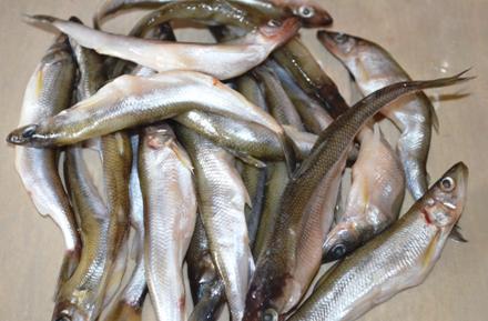 Помыть рыбу