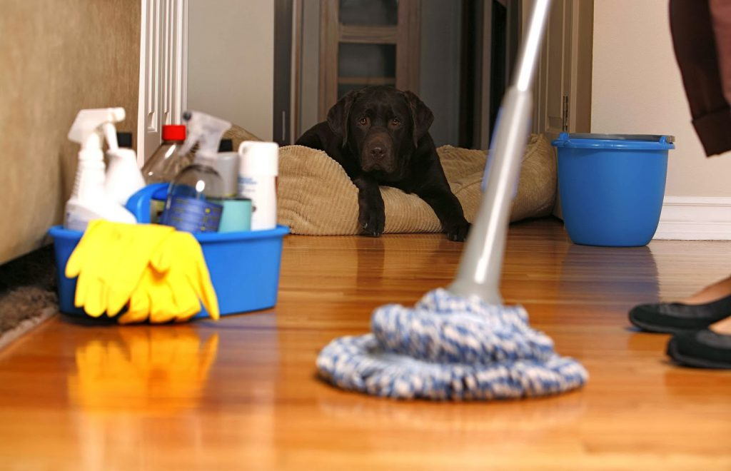 Уборка квартиры после собаки